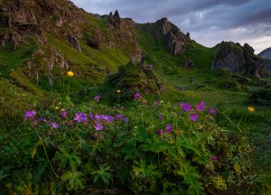 Kukat ja vuori kopio
